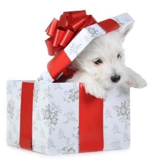 De ce sunt contra cadourilor de Craciun cu animale